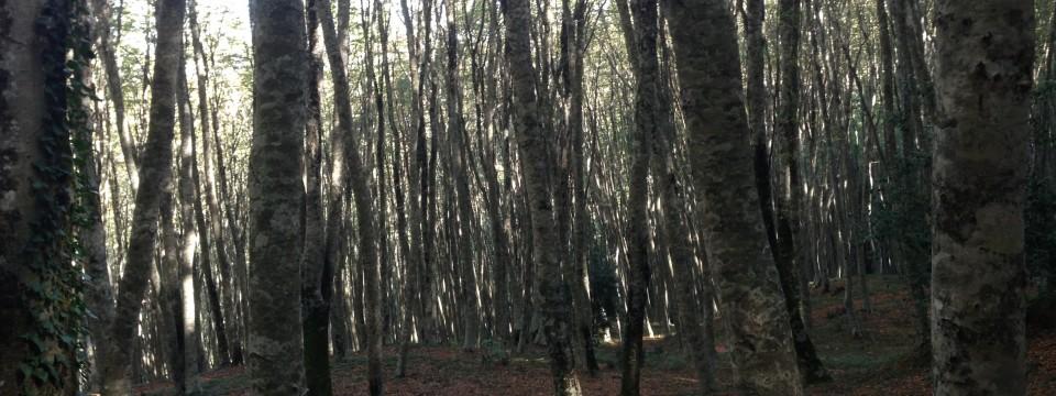 (Italiano) La Montagna di Nocera