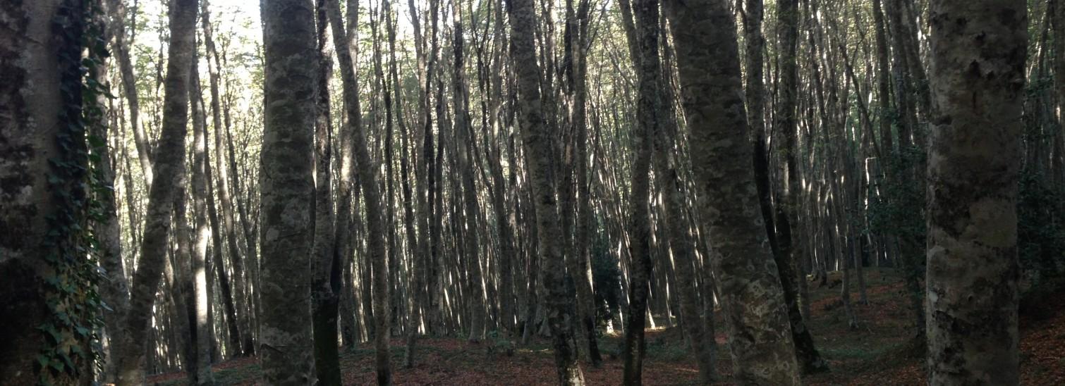La Montagna di Nocera